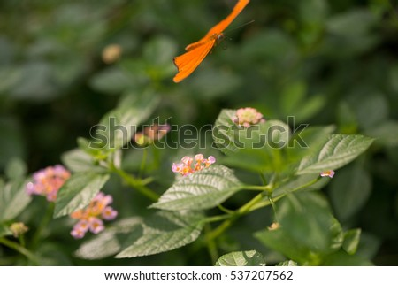Small flower with butterfly