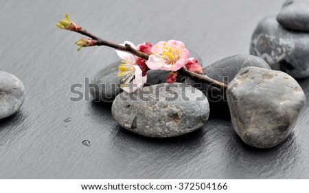 small flowers on branch resting on stones - stock photo