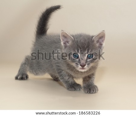 Small fluffy tabby kitten with blue eyes on yellow background
