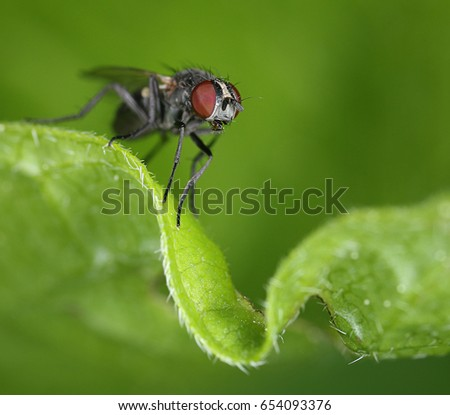 Small fly on curly green leaf close-up macro