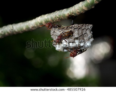 small flying insects look like Paper wasp, Hymenoptera, Omnivorous start building their nest colony under a small tropical plant outdoor authentic natural insect, green environment background