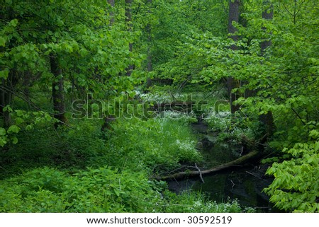 Small forest river crossing alder forest at springtime - stock photo