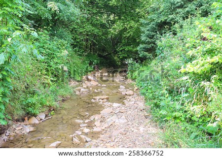 Small forest stream in hot summer day - stock photo