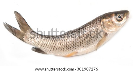 small fresh fish on a white background - stock photo