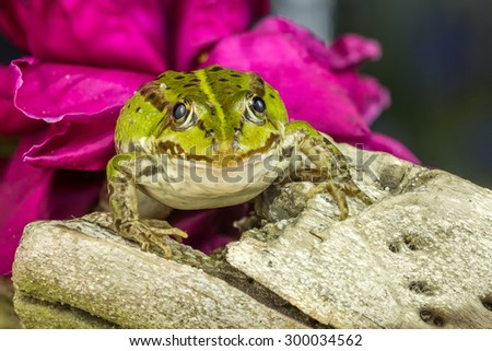 Small Frog On A Tree  - stock photo