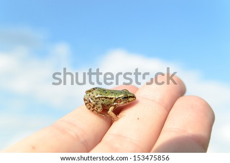 small frog rescued from a busy road on hand as a background, nature series