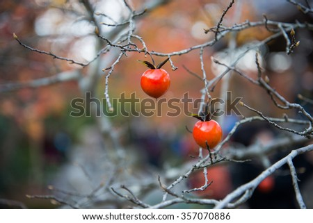 Small fruit on dried branch in garden - stock photo