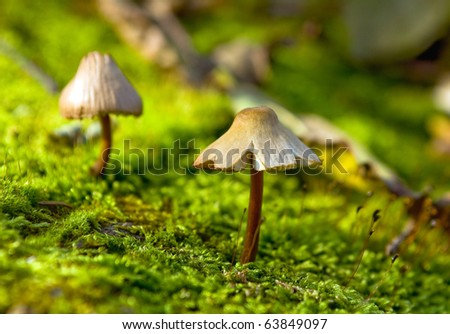 Small fungus growing in the green moss - stock photo