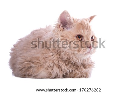 Small funny kitten on a white background - stock photo