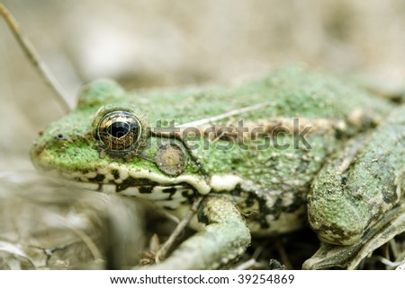 Small green frog sitting on the ground