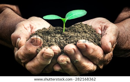 Small green plant in the old female hands,selective focus - stock photo