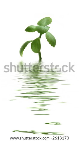 Small green plant in water - stock photo