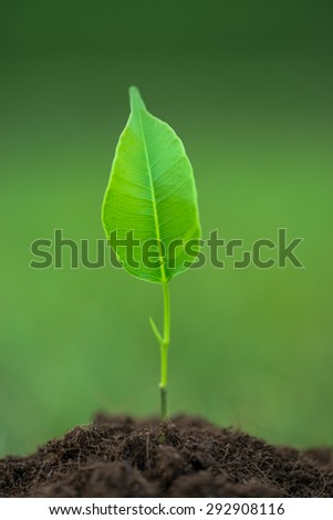 Small green plant starting to grow from the pure eco soil over the green grass background - stock photo
