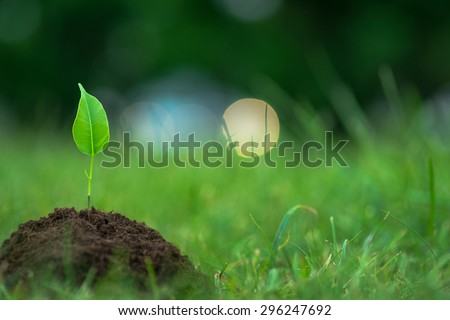 Small green plant with mysterious lights over the green grass background - stock photo