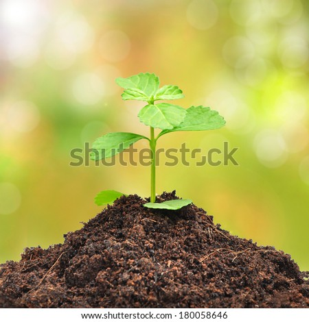 Small green sapling growing out from heap of soil - stock photo