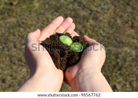 Small green sapling in female hands - stock photo