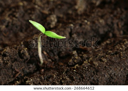 small green seedling in the ground - stock photo