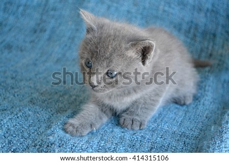 Small grey blue kitten looking to the side - stock photo