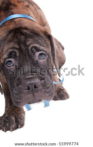 small guilty looking puppy - stock photo