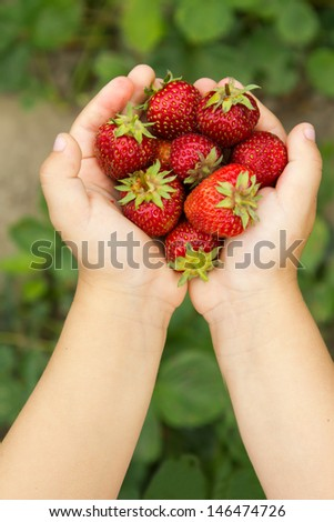 small hands holding a fresh strawberry - vertically - stock photo