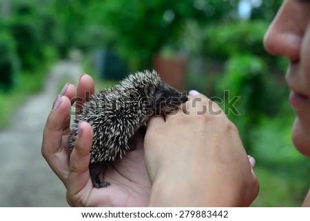 Small hedgehog  - stock photo