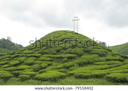 Small Hill in a Tea Plantation - stock photo
