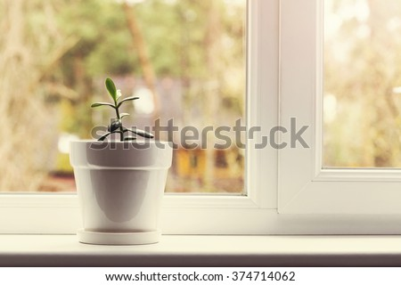 small indoor crassula plant in pot on window sill - stock photo