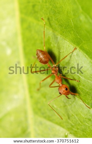 Small insect in the green garden - stock photo