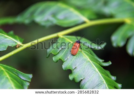Small insect on a green leaf in a cloud forest near Mindo, Ecuador - stock photo