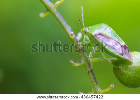 small insect on green branch - stock photo