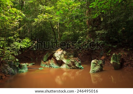 Small jungle river in borneo - stock photo