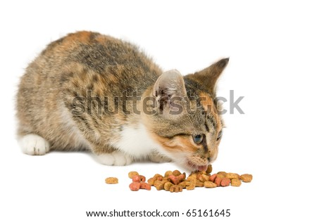 small kitten eating dry cat food