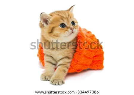 Small kitten in a knitted sweater, the British breed, red marble color. The age of one month. Isolated on white - stock photo