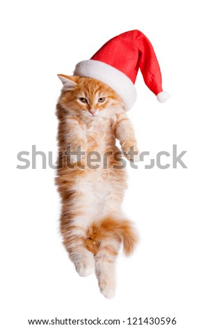 Small kitten in a santa hat. - stock photo