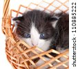 small kitten in basket - stock photo