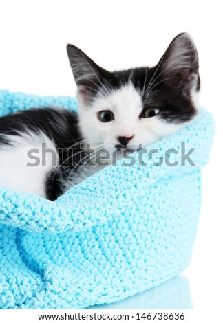 Small kitten in blue knitting basket isolated on white