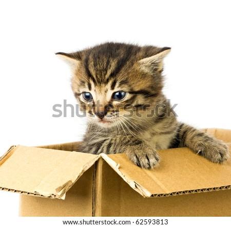 Small kitten in box - stock photo