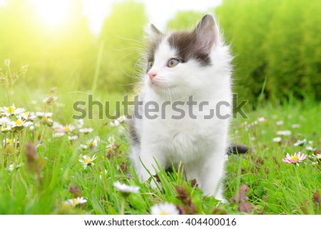 Small kitten in the grass - stock photo