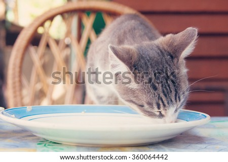 Small kitten licking the plate