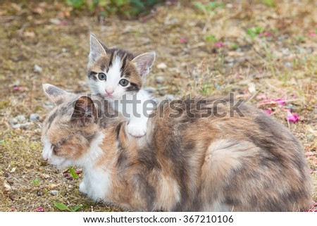 Small kitten looking at the camera with big round eyes over the top of the mother cats back with one paw on her neck outdoors in the garden - stock photo