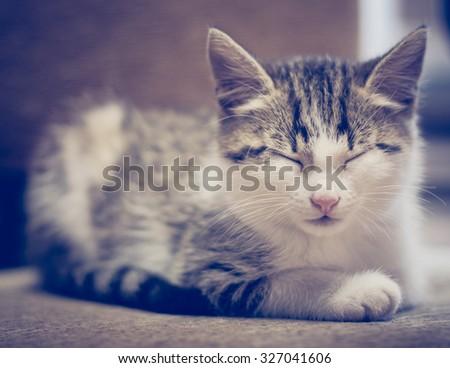 Small kitten lying on sofa. - stock photo