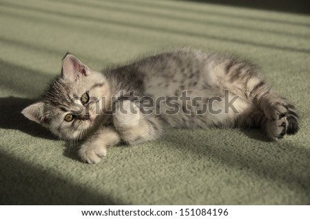 Small kitten lying on the carpet - stock photo