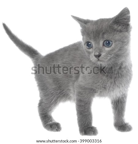Small kitten move on a white background