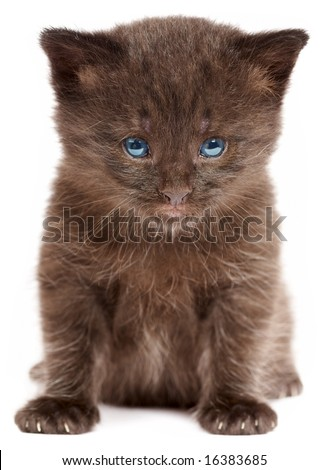 Small kitten on a white background...