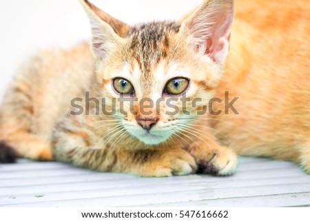 royal canin cat