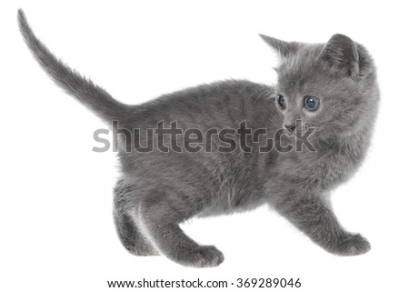 Small kitten playing on a white background
