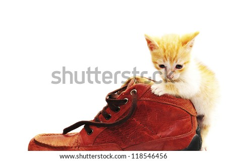 Small kitten playing with a shoe isolated on white - stock photo