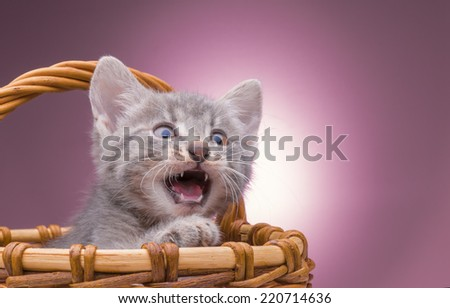 small kitten sitting in a basket in the studio on a pink background