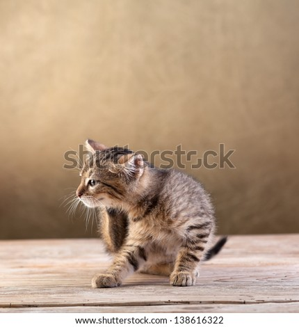 Small kitten sitting on old wooden floor scratching