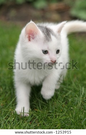 Small kitten walking around in the garden - stock photo